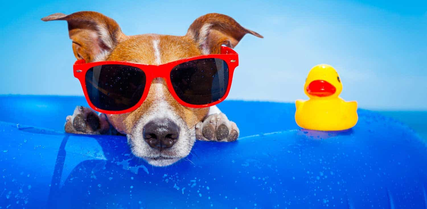 Watch 10 Best Dog Toys for Summer video